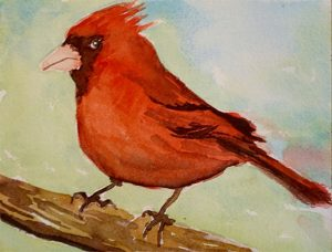 Watercolor painting Cardinal