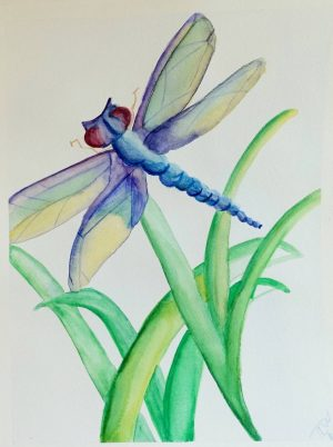 water-color-dragon-fly